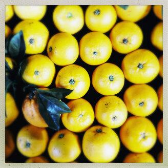 Oranges, Puerto de Naos, La Palma, Canary Islands, Spain - SEF000603