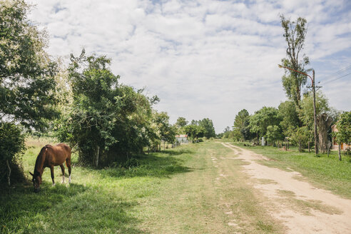 Argentina, Esteros del Ibera, Countryside scene with horse and dirt track - AMCF000062