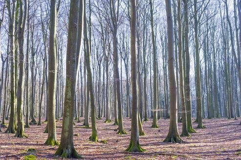 Germany, Mecklenburg-Western Pomerania, Ruegen - MJF000894