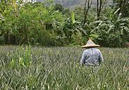 Thailand, Takua Pa, Khao Lak, farmer on field - HC000015
