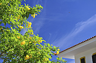 Portugal, blossoming tree and house - SCH000144