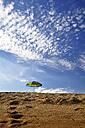 Portugal, Algarve, Sun shade at beach - SCH000147