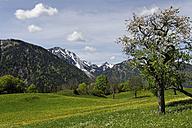 Germany, Bavaria, Meadows at Hochkreuth in the Leitzach valley near Bayerischzell - LB000687