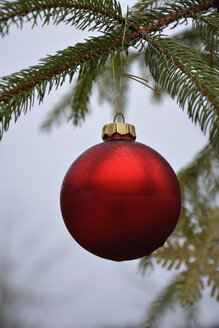 Red christmas bauble hanging on fir branch - AXF000662