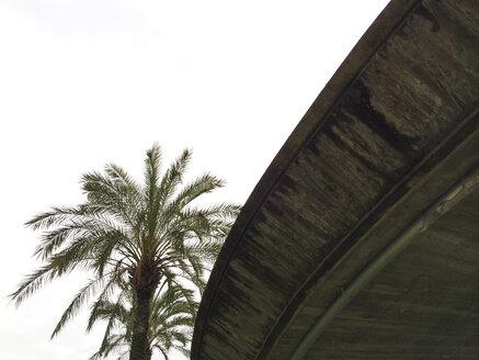 Pedestrian bridge with palm tree in Bilbao, Spain - FLF000401