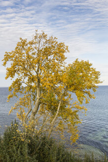 Germany, Brodten, Autumnal trees - SR000444