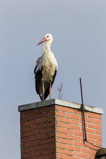 Germany, Stork on chimney - SR000458