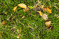 Germany, Fuldabruck, Leaves and moss on forest soil - SR000459