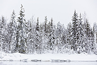 Finland, Snow-capped trees - SR000394
