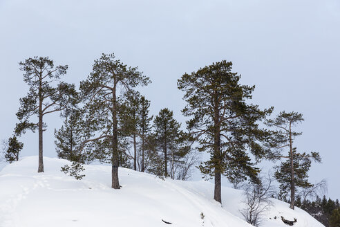 Finland, Inari, Trees in winter landscape - SR000390