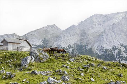 Austria, Lungau, horses and house - KV000037
