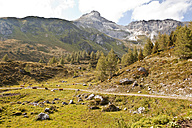 Austria, Lungau, trail and cows in alpine landscape - KVF000056