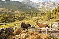 Austria, Lungau, horses on paddock in alpine landscape - KVF000058