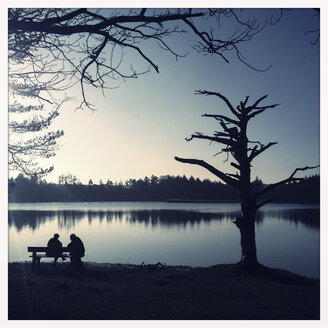 Surreal Tree, Couple on the bench, Fohnsee, Osterseen, Iffeldorf, Bavaria, Deustchland - GSF000846