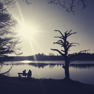 Surreal Tree, Couple on the bench, Fohnsee, Osterseen, Iffeldorf, Bavaria, Deustchland - GSF000843