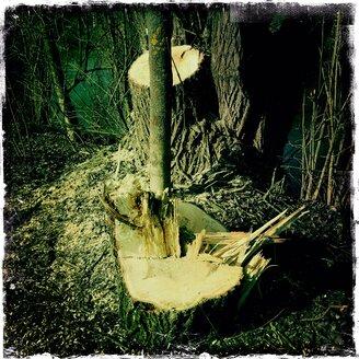 Tree trunk, Altmuehltherme near Eichstaett, Altmuehltal, Eichstaett, Bavaria, Deustchland - MABF000220