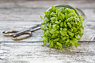 Glass of garden cress and scissors on grey wooden table - LVF000909