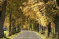 Germany, Bavaria, Upper Bavaria, Bad Toelz, tree-lined road in autumn - SIEF005177