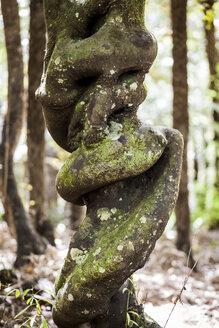 New Zealand, Whitianga, Tree Trunk - WV000493