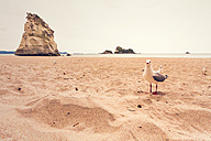 New Zealand, North Island, Cathedral Cove and seagulls on beach - WV000477