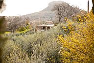 Italy, Tuscany, Volterra, olive grove - KVF000064