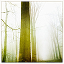 Morning fog in the forest of the Harburg Hills, Hamburg, Germany - MSF003494