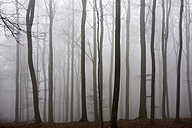 Germany, Hesse, fog in the nature park Taunus - ATAF000034