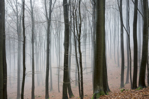 Germany, Hesse, fog in the nature park Taunus - ATAF000030