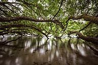 New Zealand, Taupo, trees at Huka Falls - WV000541