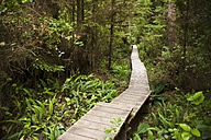 Canada, British Columbia, Vancouver Island, wooden boardwalk in forest - DISF000684