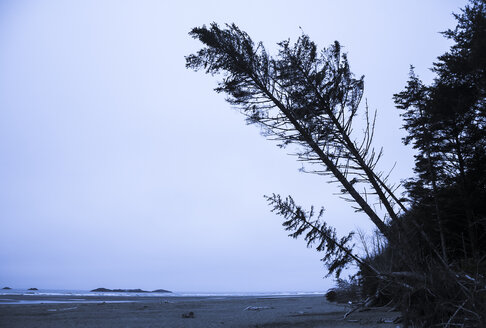 Canada, British Columbia, Vancouver Island, tilting trees at beach - DISF000683