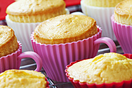 Baking dishes formed like cups with baked cupcakes on cooling grid - CSF021121