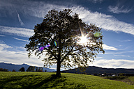 Germany, Upper Bavaria, tree against the sun near Sindelsdorf - CSF021197