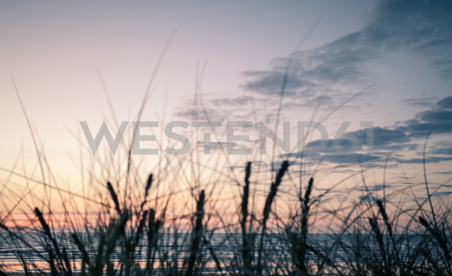 New Zealand, Sunset at Foxton beach - WV000568