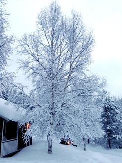 Sweden, Darlana, near Idre, winter landscape - TKF000342
