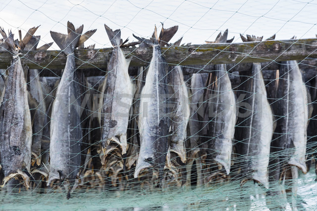 Norway, Skallelv, Stockfish drying on rack - SR000483