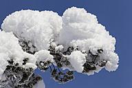 Finnland, near Saariselka, Snow covered tree branch - SR000472