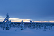 Finnland, near Saariselka, Snow covered trees - SR000466