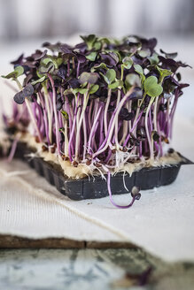 Plastic container of purple radish cress on wooden board - SBDF000755