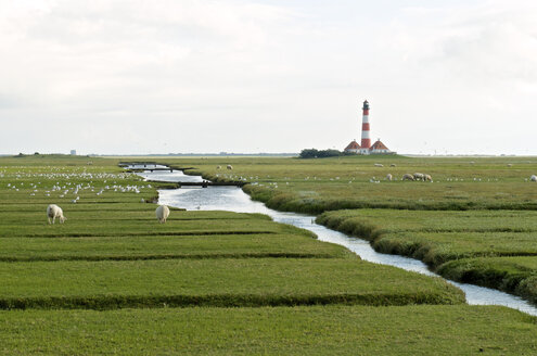 Germany, Schleswig-Holstein, North Sea Coast, View of Westerheversand Lighthouse and sheeps - JEDF000180