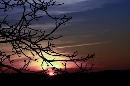 Germany, North Rhine-Westphalia, Minden, Ostwestfalen-Lippe, Sunset - HOHF000675