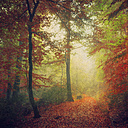 Germany, North Rhine-Westphalia, Wuppertal, Forest track in autumn - DWIF000035