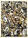 Grains, birdseed, pet food, - BFRF000395
