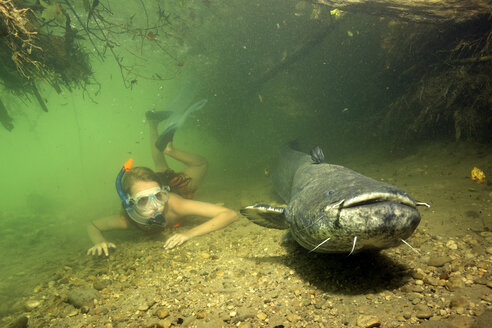 Germany, Bavaria, Girl diving with wels catfish, Silurus glandis, in river Alz - YRF000011