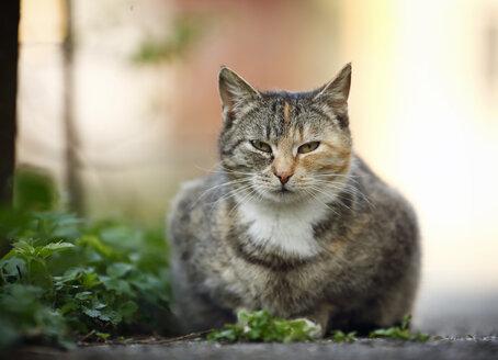 Tabby cat lying at wayside - SLF000332