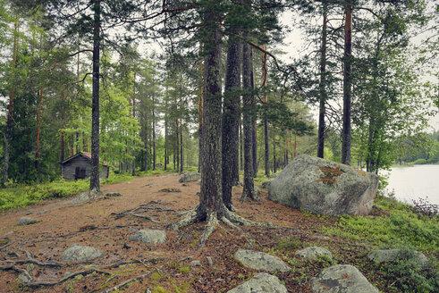 Sweden, Leksand, Forest and wooden hut at Lake Ejen - BR000272