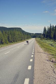 Sweden, Arvidjaur, Reindeer walking on street - BR000422