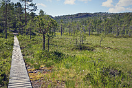 Sweden, Oernskoeldsvik, Skuleskogen National Park, Boardwalk through swampy landscape - BR000390