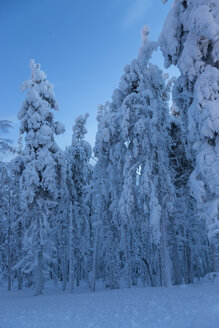 Scandinavia, Finland, Kittilae, Forest, snow-covered trees - SR000515
