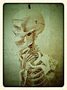 Skeleton, studio - CSF021253